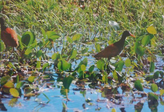 Esteros del Iberá: naturaleza y cultura